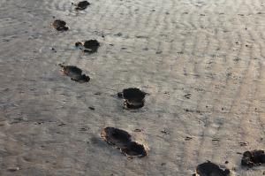 footprints-284708_640